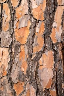 Bark of the pine