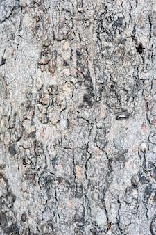 樹皮のテクスチャ背景