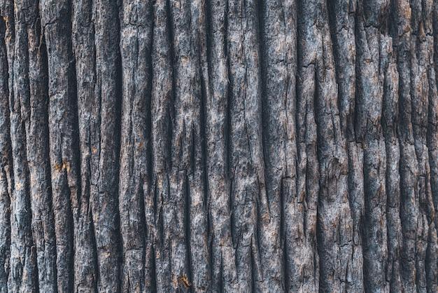 ワシントンヤシの木の広い幹の樹皮の質感