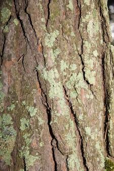 녹색 이끼와 나무 껍질 텍스처입니다. 나무의 질감