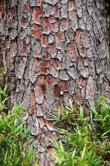 樹皮の木と緑の草のテクスチャ背景