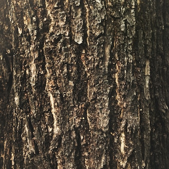 The bark on a tree