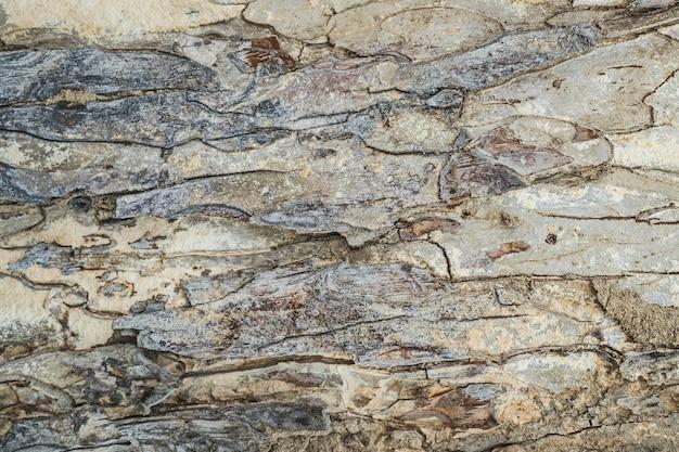 樹皮の木の質感バックグラウン