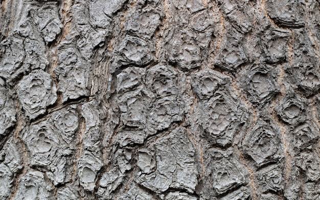 Bark wood tree old timber plank texture natural background