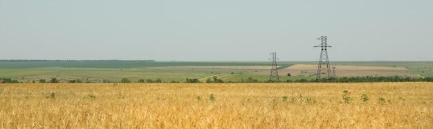 Ячменное поле. сельское хозяйство и сельское хозяйство. первый летний урожай