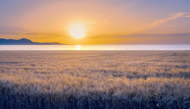 海側の大麦畑、キプロスのポリスの劇的な色の夕日の風景