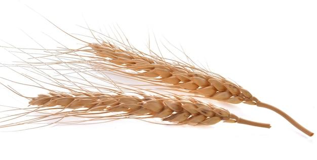 Ячменный рис на белом фоне