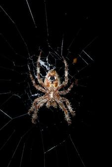 夜のウェブの納屋のクモ。