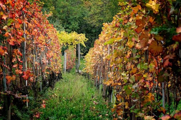 Винодельческий регион бароло, ланге, пьемонт, италия