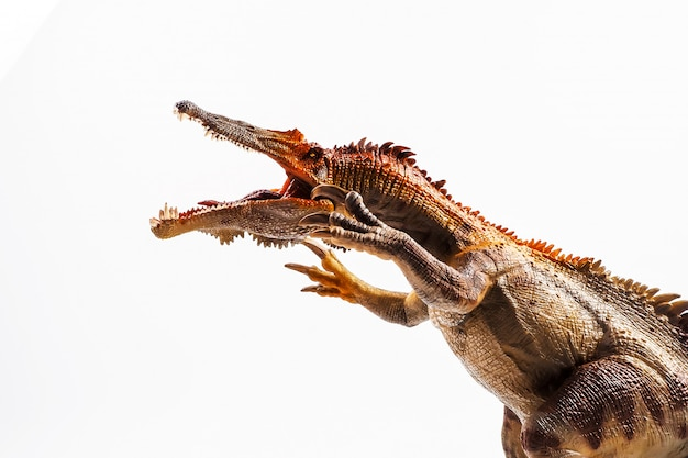 Baryonyx, dinosaur on white background