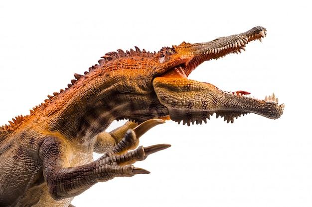 Baryonyx, dinosaur on white background