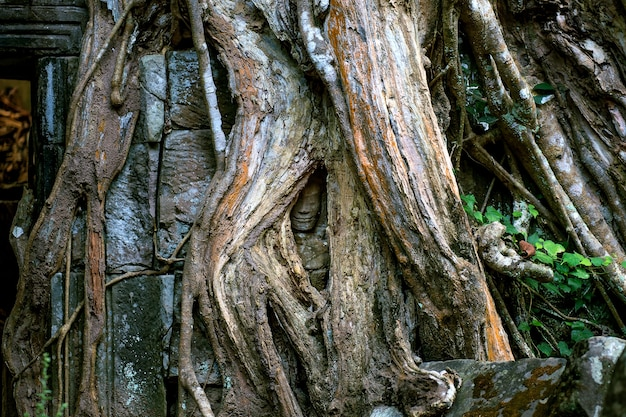 Барельефная статуя кхмерской культуры в ангкор-ват, камбоджа.