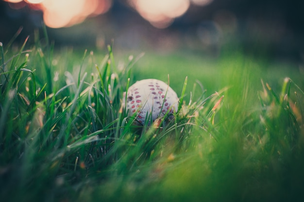 Baseball ball in the grass