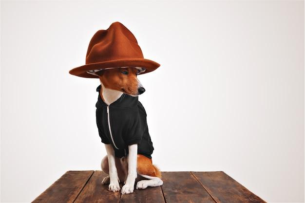 Il cane basenji in una felpa con cappuccio nera indossa un grande cappello da montagna con fodera colorata isolato su bianco