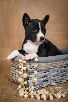 木製のバスケットに座っているバセンジーの子犬
