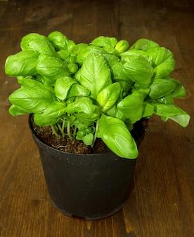 A basil plant on wood