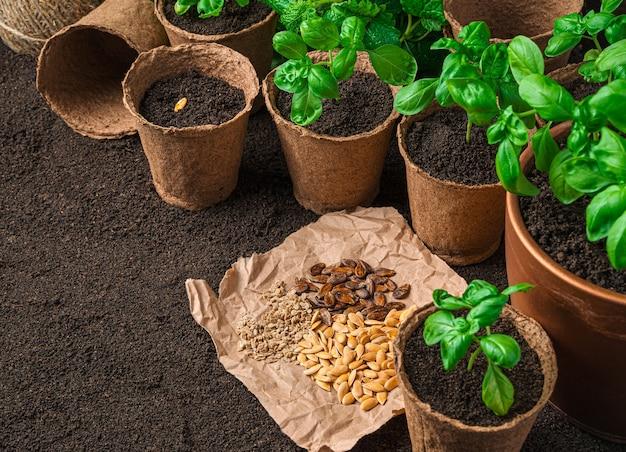 バジルの芽とさまざまな種類の種子。コピースペースのある側面図。