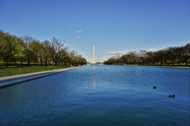 Basin between the obelisk and the lincoln memorial in washington dc, usa. the afternoon was sunny and some ducks swim in the water