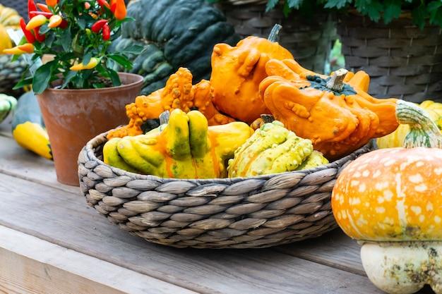 黄色とオレンジ色のパティソンで日光浴