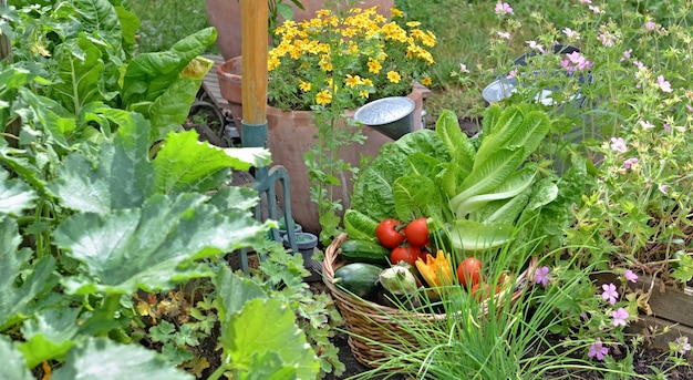 Basket filled with freshly picked seasonal vegetables in the flowering garden with gardening tools