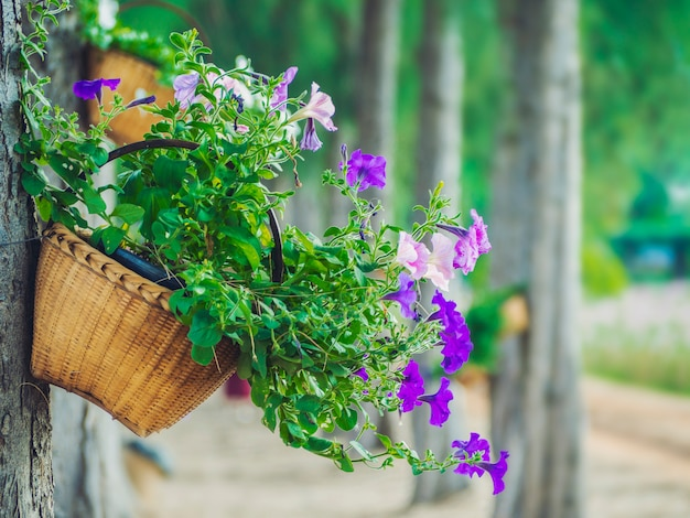 A basket of flowers is hung with a tree