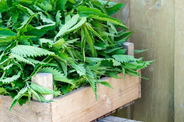 A basket of fresh nettles in a wooden box. nettle leaf with copy space.