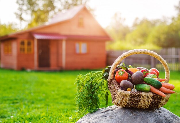 Basket full of fresh ecological vegetables on the grass at sunset in rustic wooden house.