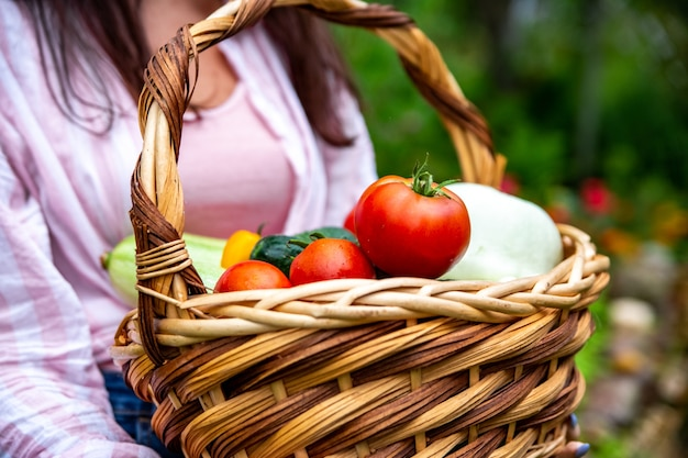 Basket full of fresh organic vegetables from eco farm holded by farmer no face