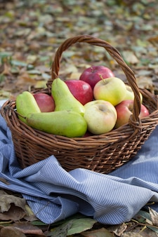 Basket full of fruits in summer grass. fresh grapes, pears and apples in nature