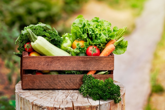 Basket full of harvest organic vegetables and root on organic bio farm.
