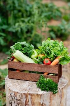 有機バイオファームで収穫有機野菜と根でいっぱいのバスケット。秋の野菜の収穫。