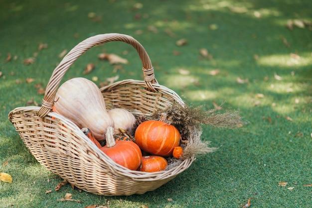 Корзина, полная спелых мини-тыкв в осеннем саду, покрытом опавшими листьями. зеленая трава. копировать пространство.