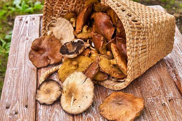 Basket full with big mushrooms on wooden table outdoor
