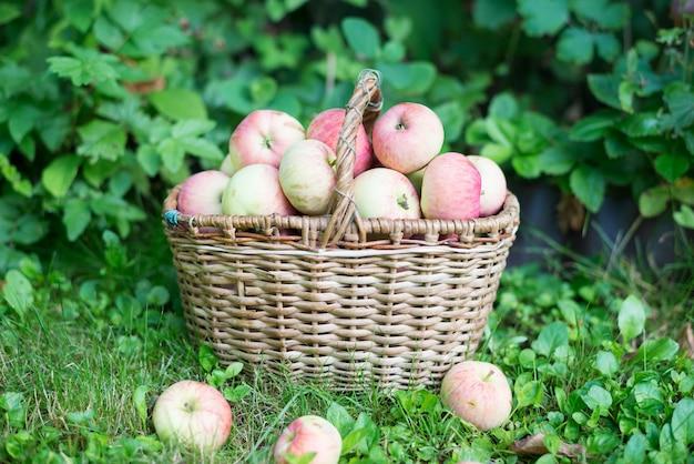 庭で熟したリンゴのバスケット