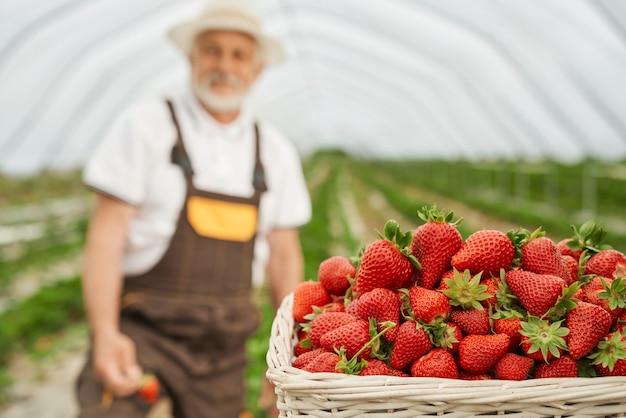 古い農家と熟したイチゴのバスケット