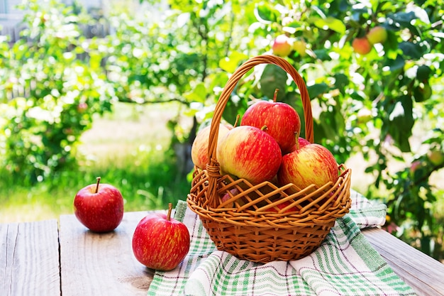 Basket of ripe red apples on a table in a summer garden