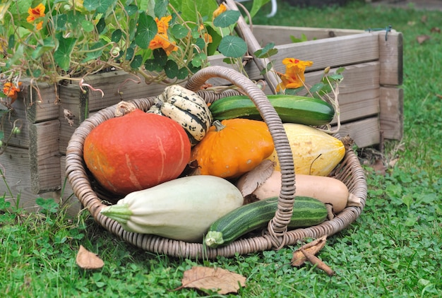 Basket of various squashes