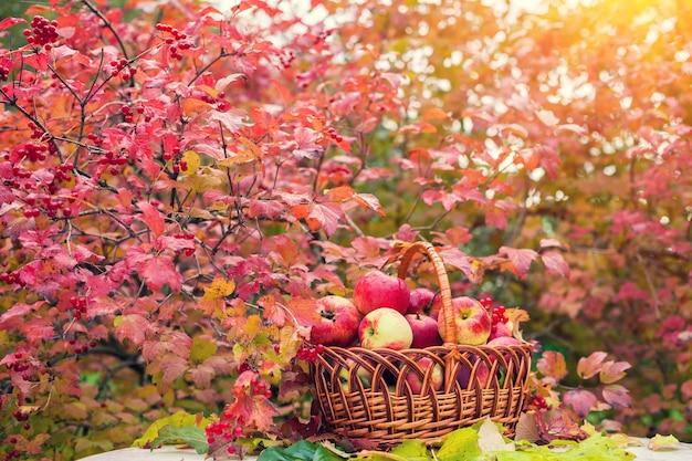 가을 과수원 잔디에 사과 바구니