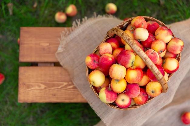 リンゴの入ったバスケットは草の上の木製のベンチに立っていますリンゴ園での収穫フラットレイ