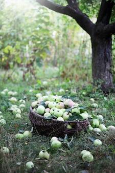 ツリーの下のリンゴのバスケット