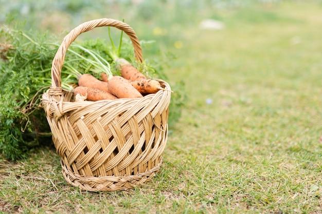 Basket with delicious garden carrots