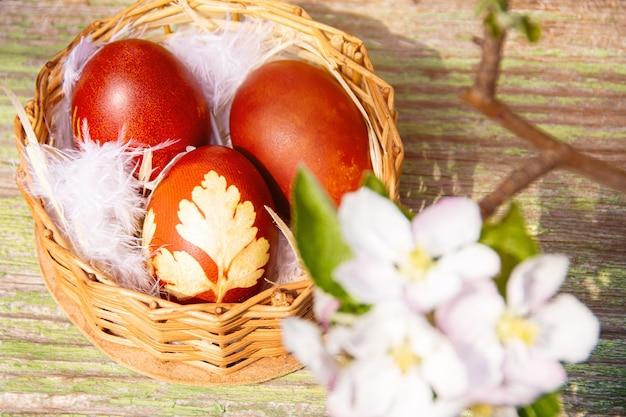 Корзина с пасхальными яйцами, украшенная коричневыми цветами абрикоса, бело-розовыми. праздничный фон. весенние каникулы.