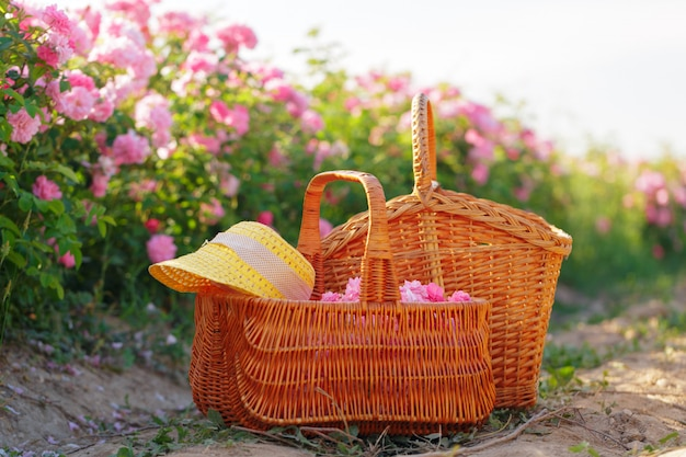 Basket with flower from pink oil roses.