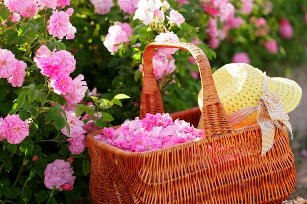 Basket with flower from pink oil roses