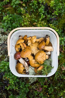 Корзина с лесными грибами на лесной зеленой поверхности