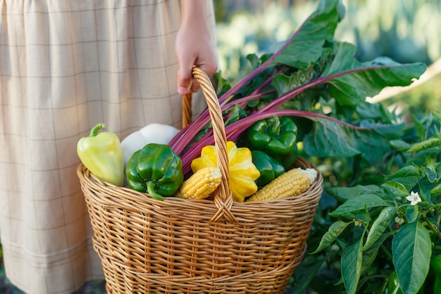 Basket with a harvest of fresh vegetables in a woman's hand