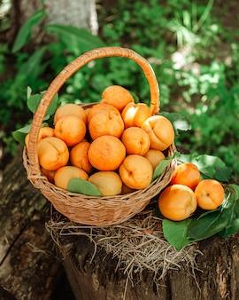 庭の麻に熟したアプリコットが入ったバスケット。田舎のライフスタイル。自家栽培の天然物。