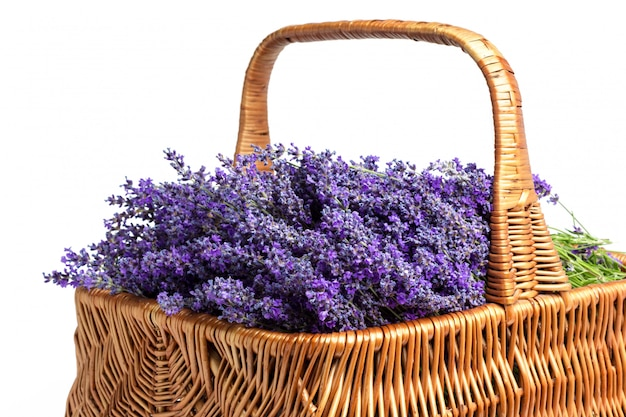 Basket with a lavender, isolated on white