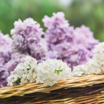 Basket with lilac flowers close-up on a blurred natural background