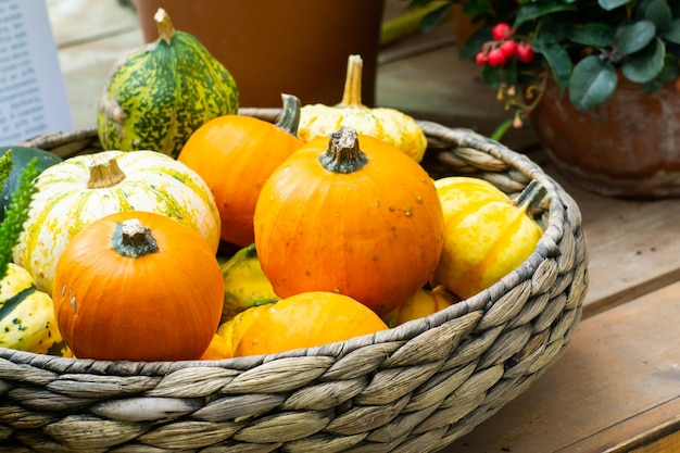 Basket with many little yellow and orange pumpkins
